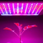 Best LED Grow Lights 2019 - Reviews And Buyer's Guide