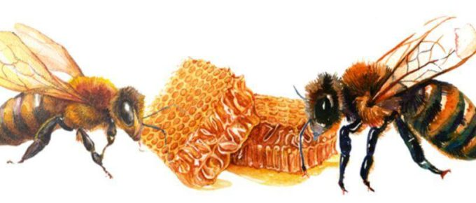 Best Honey Bee Extractor