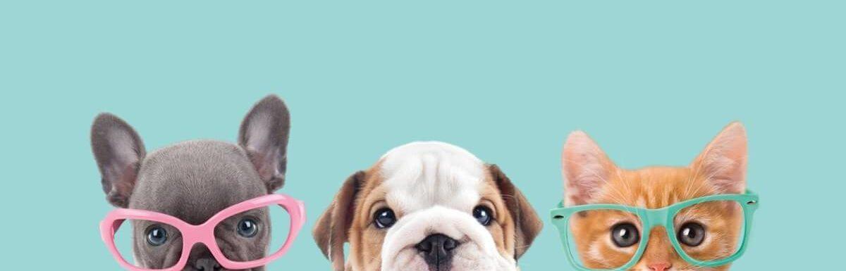 Symptoms Of Radon Poisoning In Pets