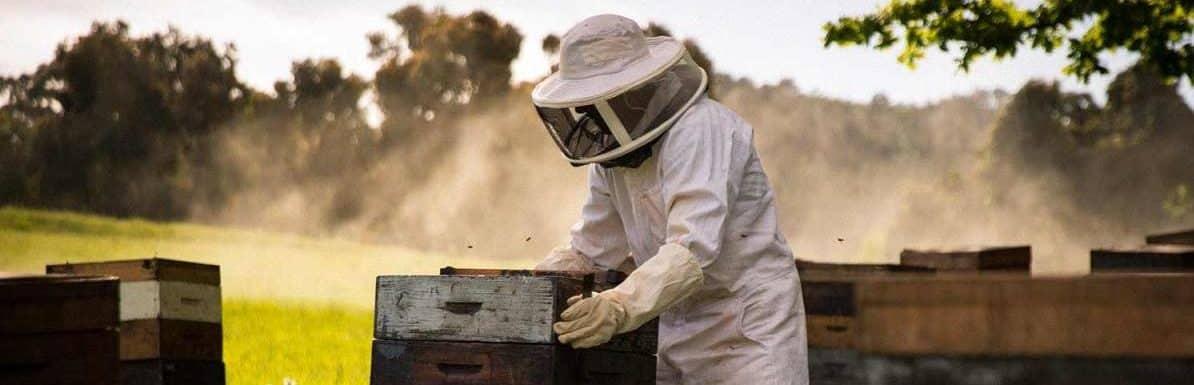 Best Beekeeping Suit 2019 – Reviews & Buyers Guide