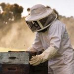 Best Beekeeping Suit 2020 - Reviews & Buyers Guide